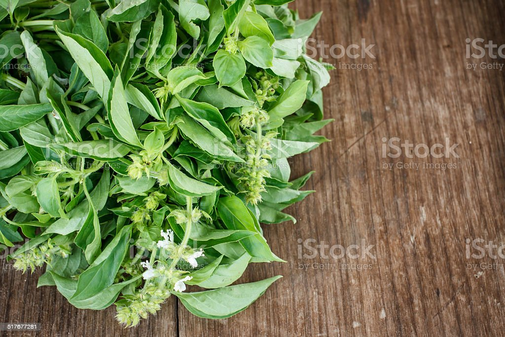 lemon basil stock photo