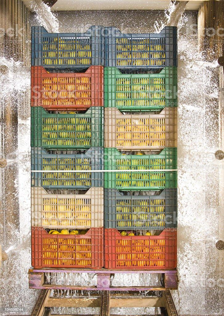 Zitrone in Kunststoff-Bin – Foto