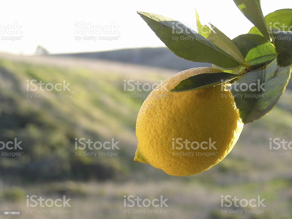 lemon in the sun stock photo