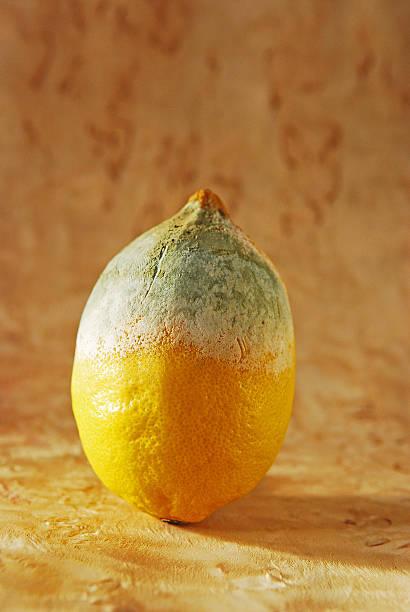 Lemon in time stock photo
