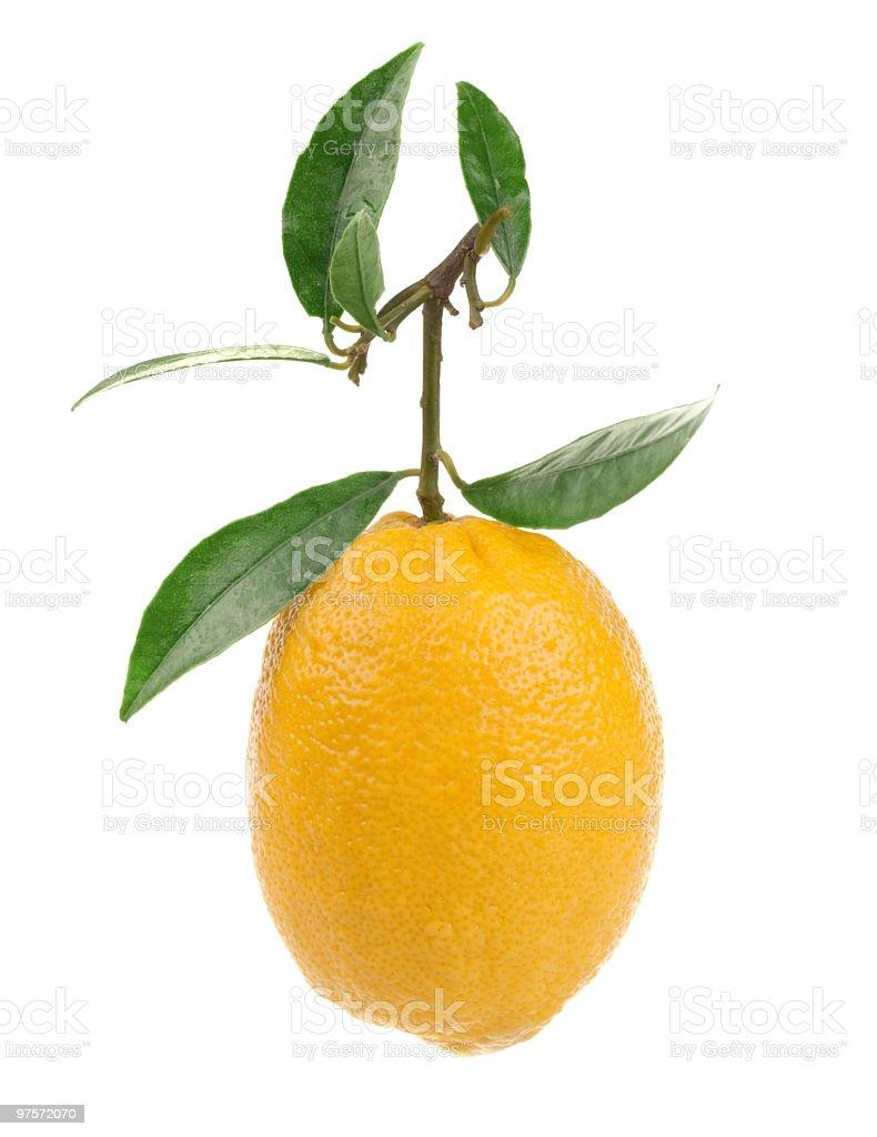 Citron isolé sur fond blanc photo libre de droits