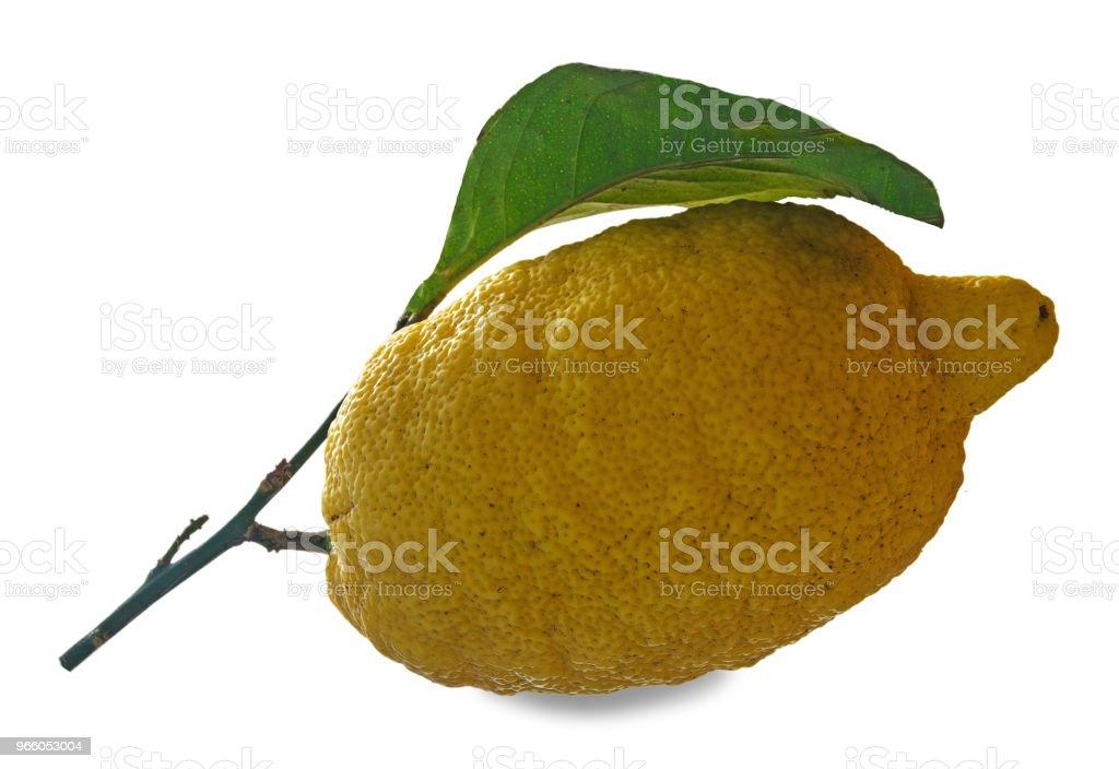 Citron på gren - Royaltyfri Citrusfrukt Bildbanksbilder
