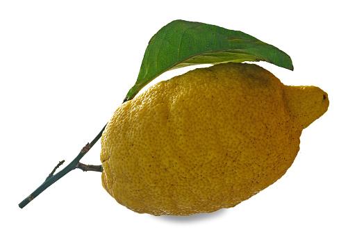 Citron På Gren-foton och fler bilder på Citrusfrukt
