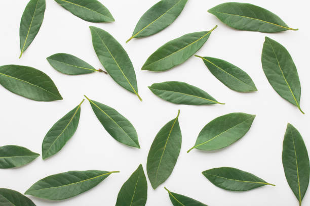 lemon or citrus leaves, on white background - tea leaf stock photos and pictures