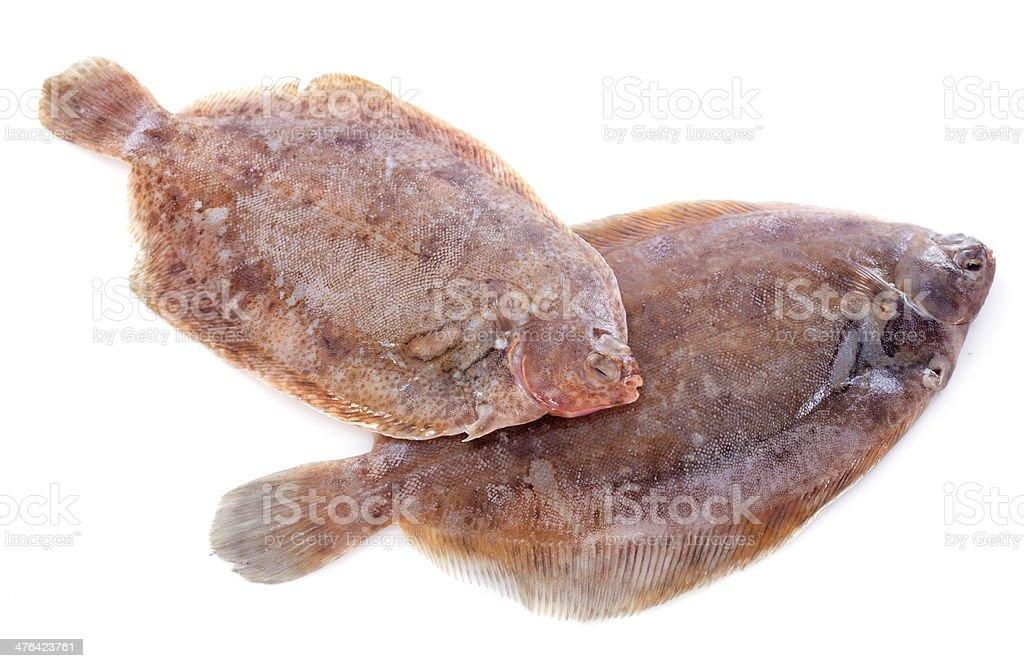 lemon soles stock photo