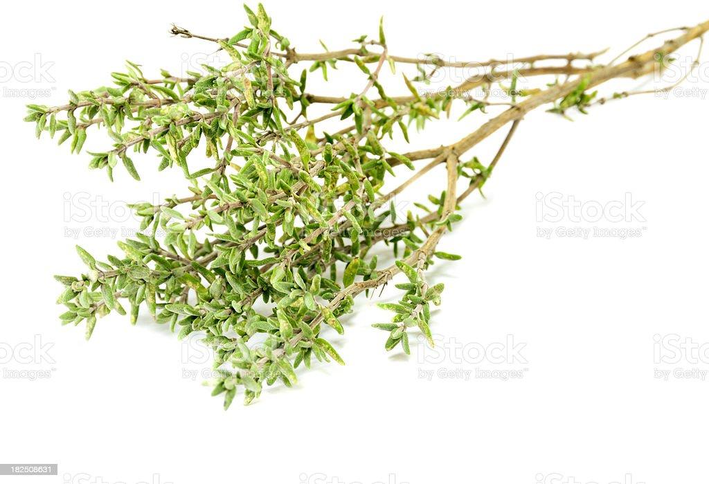 Lemon Thyme royalty-free stock photo