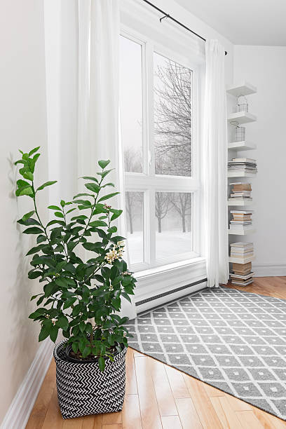 Lemon tree in a room with peaceful view stock photo