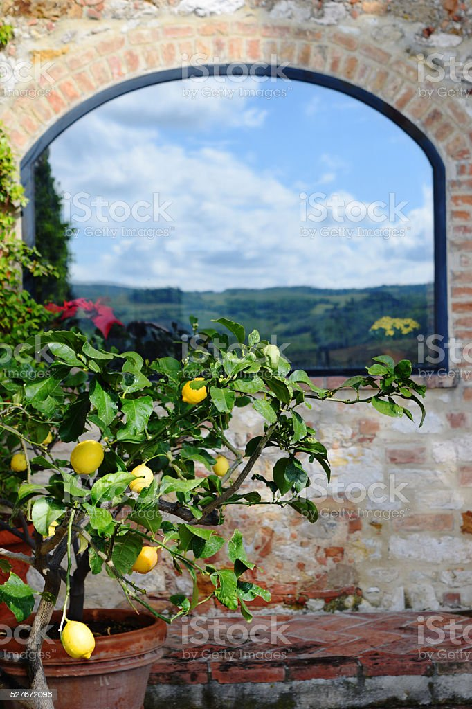 lemon tree on background   of old Tuscan house stock photo