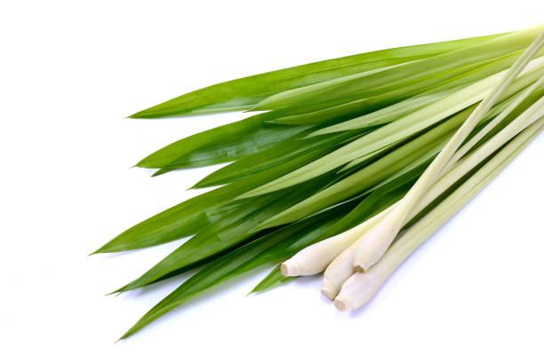 lemongrass leaf and fresh pandan leaves on white. - pandan składnik zdjęcia i obrazy z banku zdjęć