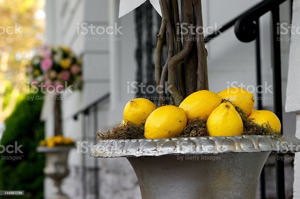 Lemons in a Tree stock photo