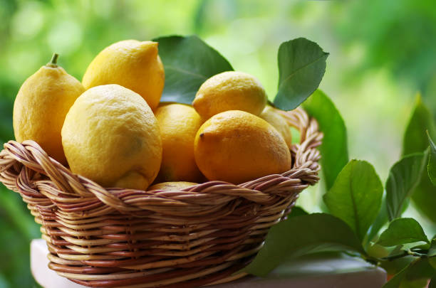 Lemons in basket isolated on green background stock photo