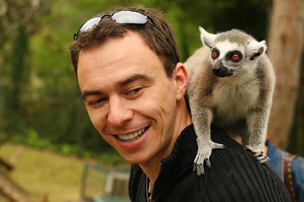 Lemur sitting on a shoulder stock photo