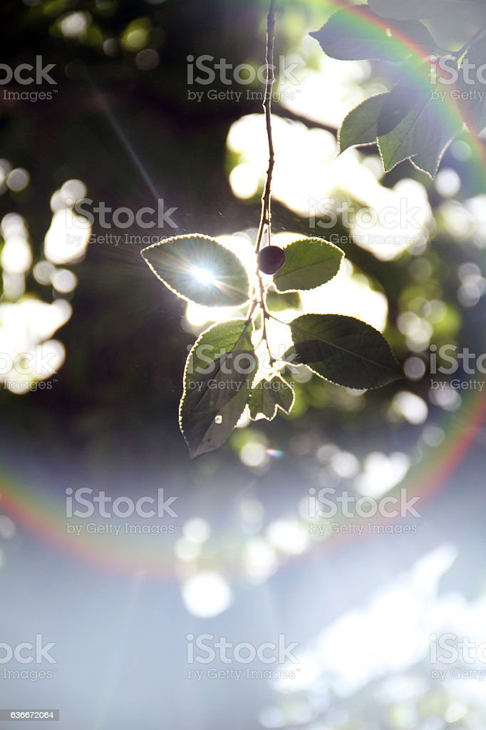 Lens flare and leafs in a sunny day Iran's nature stock photo