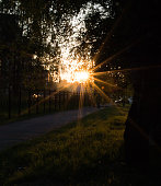 lens flare at sunset. fence, sidewalk, trees and grass.