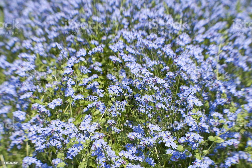 Lensbaby Shot of bright blue flowers stock photo