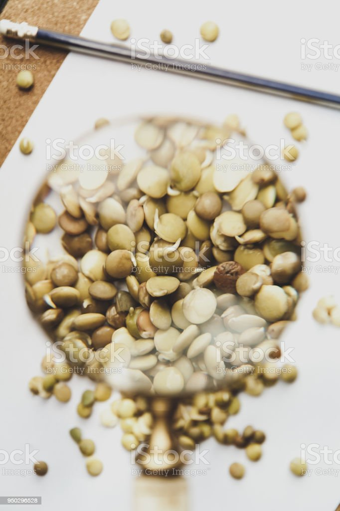 Lentil seeds under magnifying glass stock photo