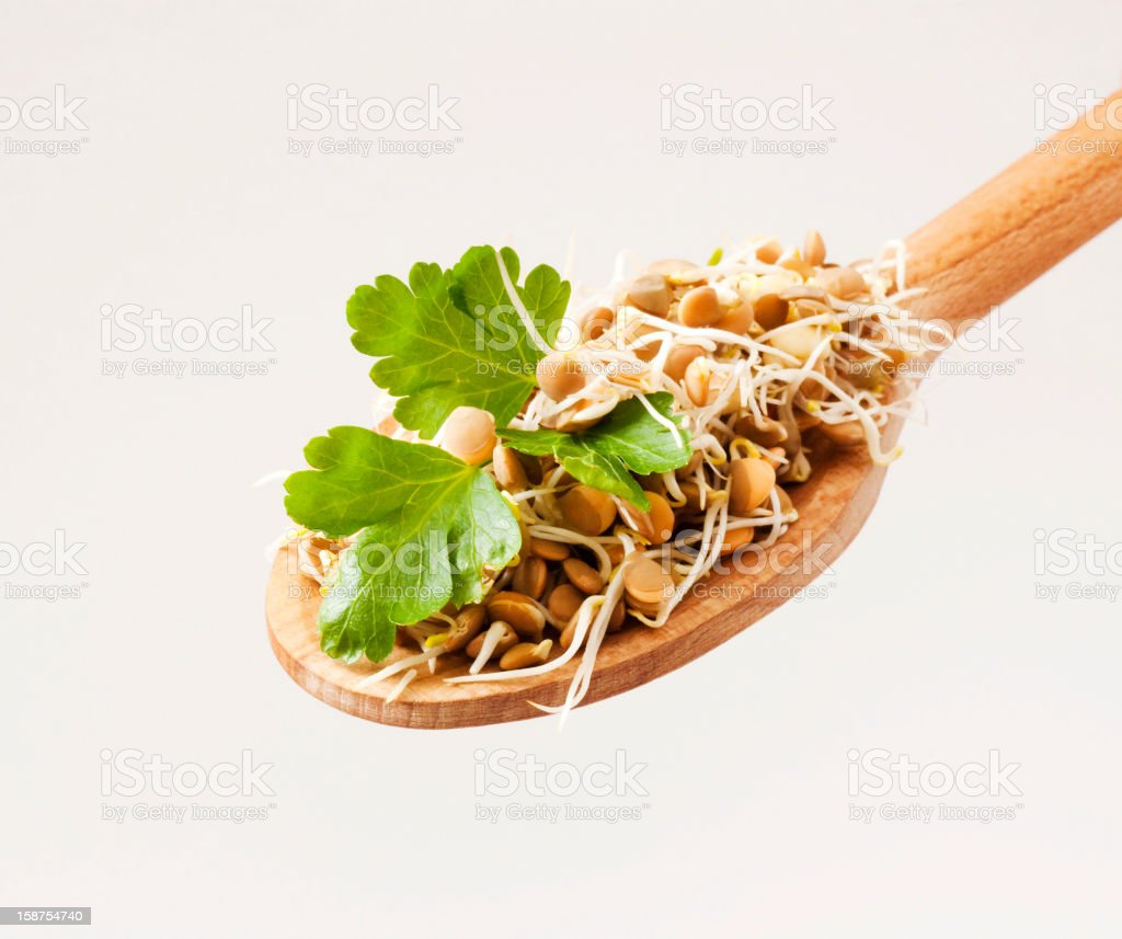 Lentil sprouts royalty-free stock photo