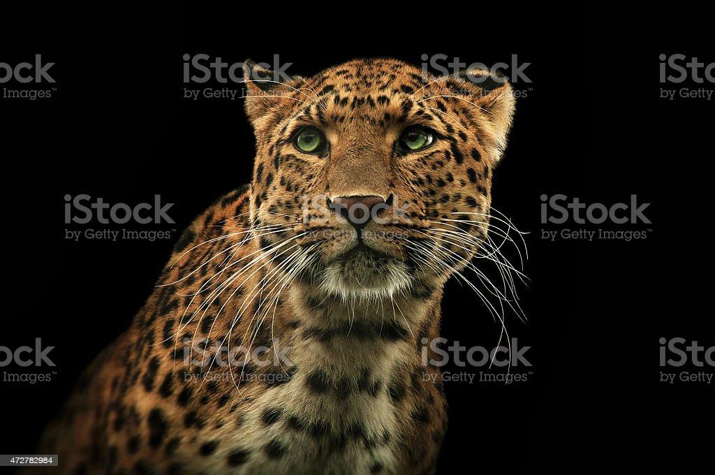 Leopard 2 stock photo