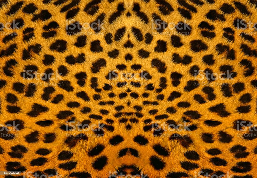 Leopard Backround stock photo