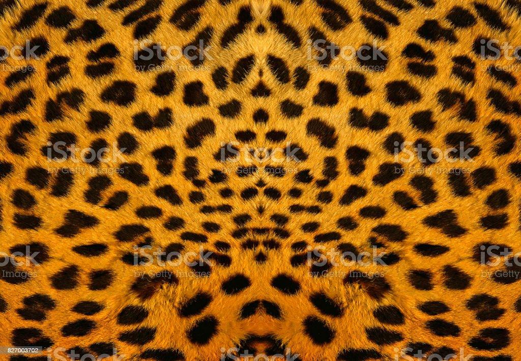 Leopard Backround stock photo