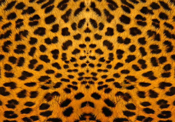 Backround leopardo - foto de stock