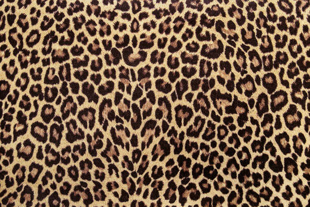 291227875c46 Top 60 Leopard Print Stock Photos