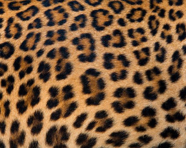 Leopard fur background stock photo