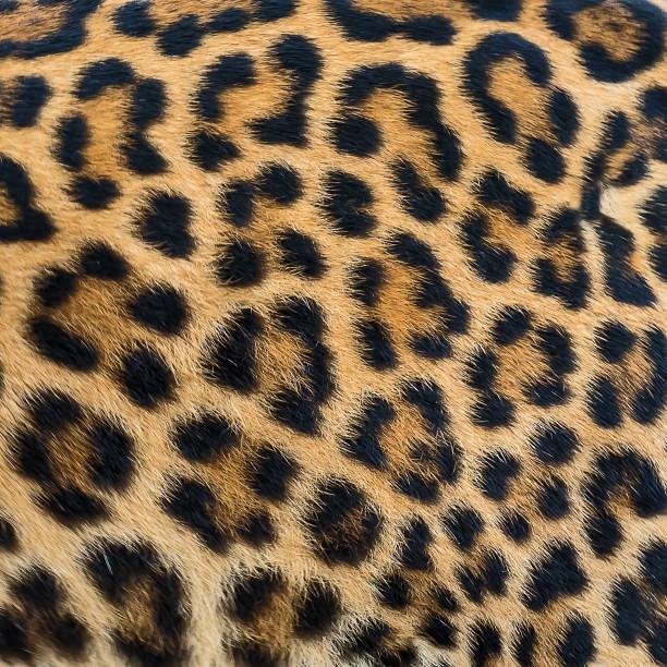 Leopard fur background. stock photo