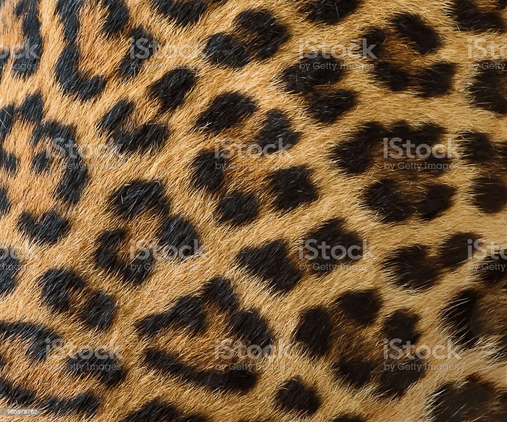 Leopard fur background. - Royalty-free Abstract Stock Photo