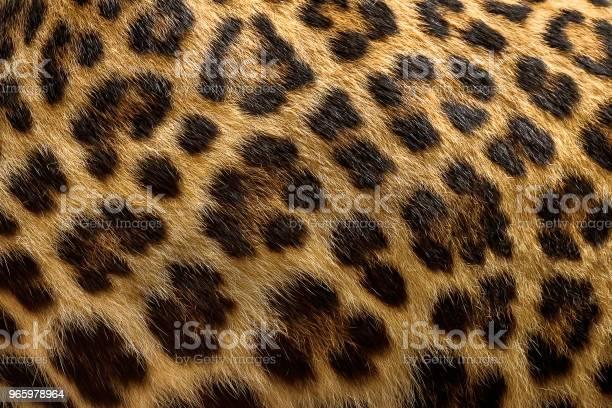 Luipaard Bont Achtergrond Stockfoto en meer beelden van Abstract