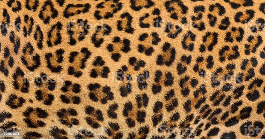 Luipaard bont achtergrond. - Royalty-free Abstract Stockfoto
