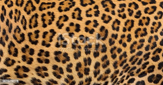 Close up leopard fur background.