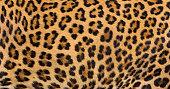 istock Leopard fur background. 965979278