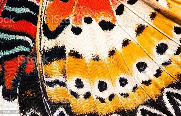Leopard lacewing butterfly wing texture background picture id499518342?b=1&k=6&m=499518342&s=612x612&h=9id84vwidxsko3cocyn6rqvaytkohzmmoexhazfjgxw=