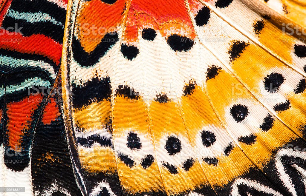 Leopard lacewing butterfly wing texture background stock photo