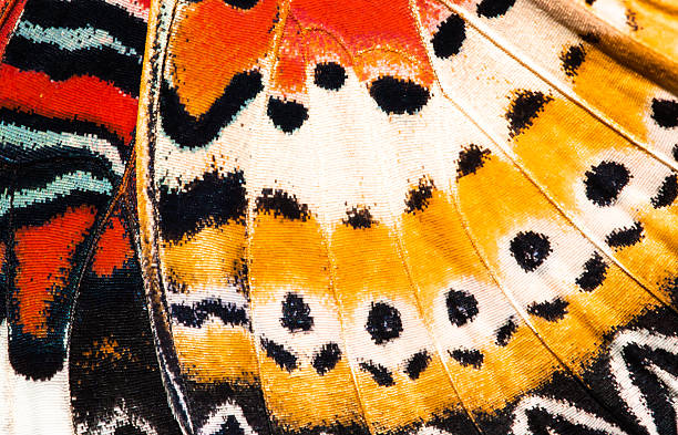 leopard lacewing butterfly wing texture background - animal markings stock photos and pictures