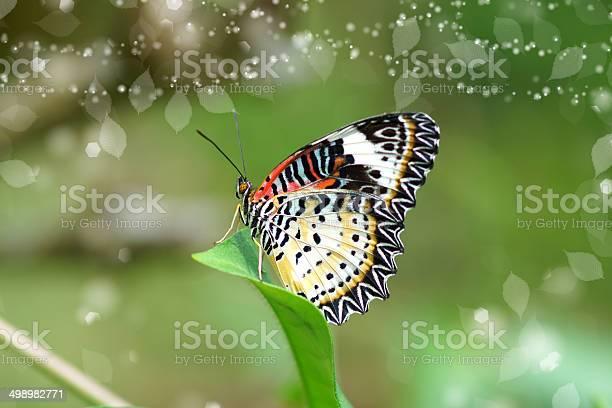 Leopard lacewing picture id498982771?b=1&k=6&m=498982771&s=612x612&h=4vj6ndh3ugz6cwm8kwjw6e9hv8bh 06 ilq5jikpoh8=