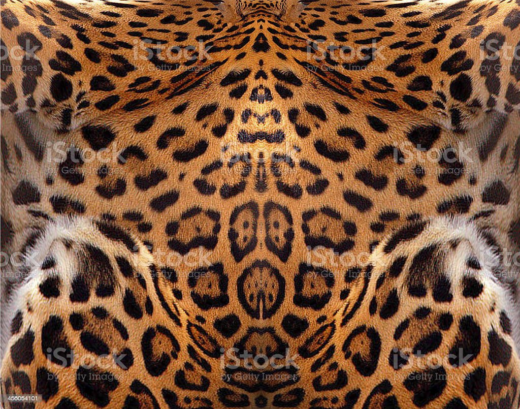 Leopard Leather royalty-free stock photo