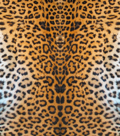Leopard Leather Stock Photo - Download Image Now