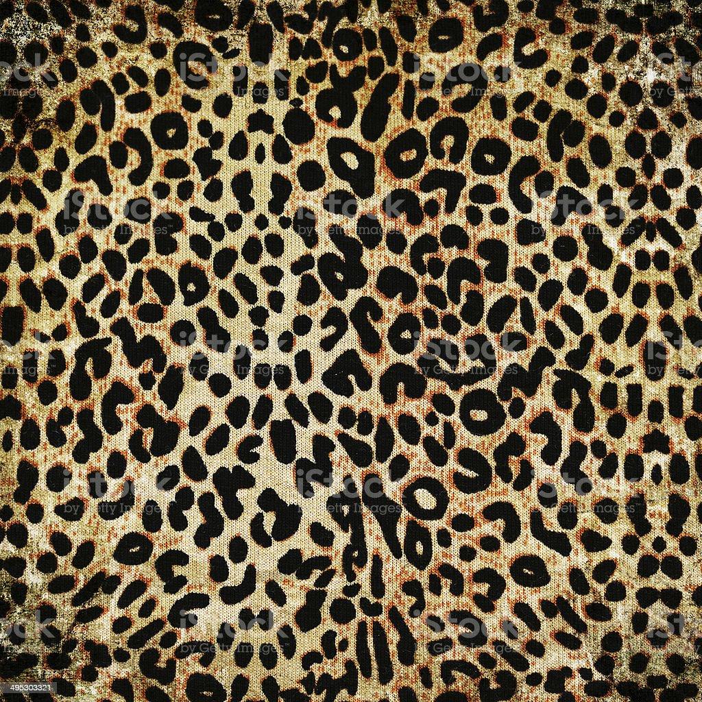 Leopardo patrón - foto de stock