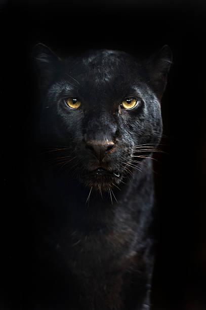 Leopard圖像檔