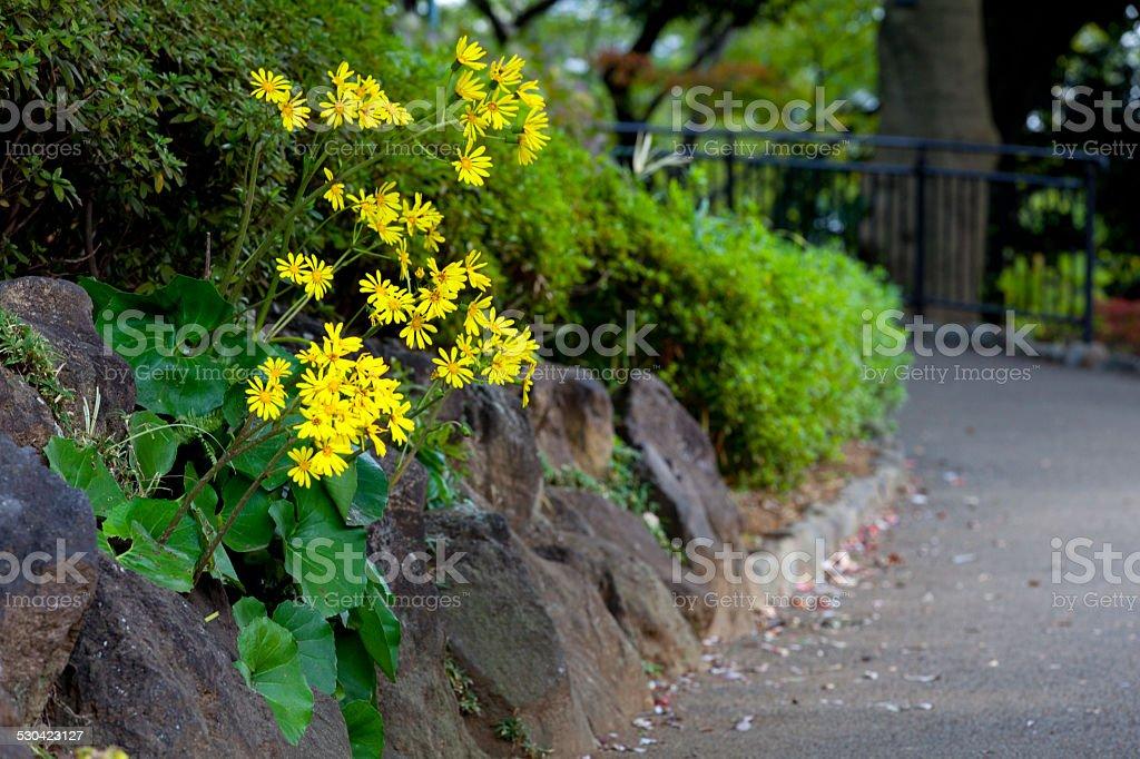 レオパードの植物が咲き誇る Nogeyama - カラー画像のロイヤリティフリーストックフォト