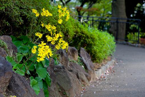 レオパードの植物が咲き誇る Nogeyama - カラー画像のストックフォトや画像を多数ご用意