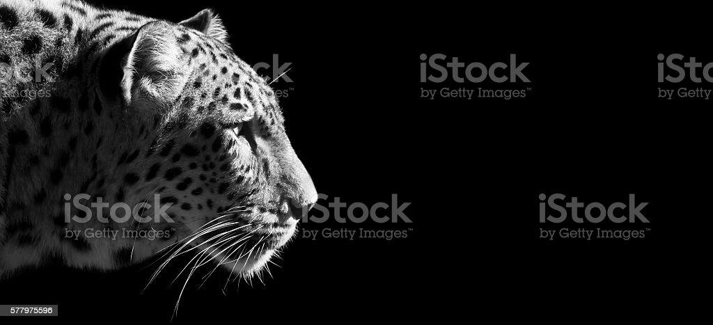 Leopard portrait banner stock photo