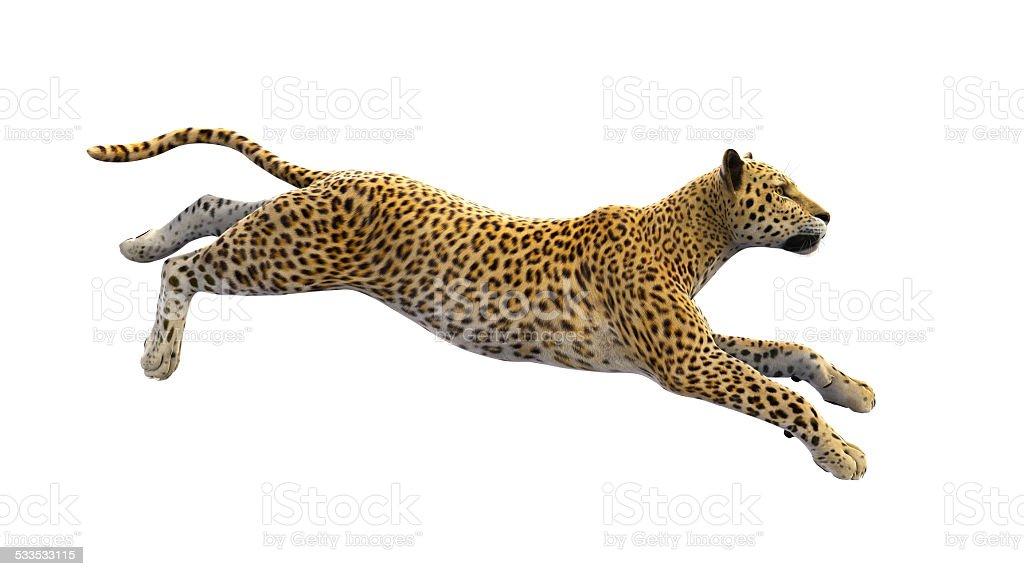 Leopard running on white background stock photo