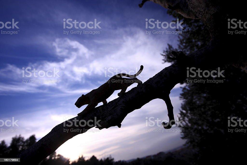 Leopard silhouette - Royaltyfri Afrika Bildbanksbilder