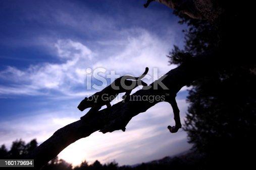 Leopard silhouette.