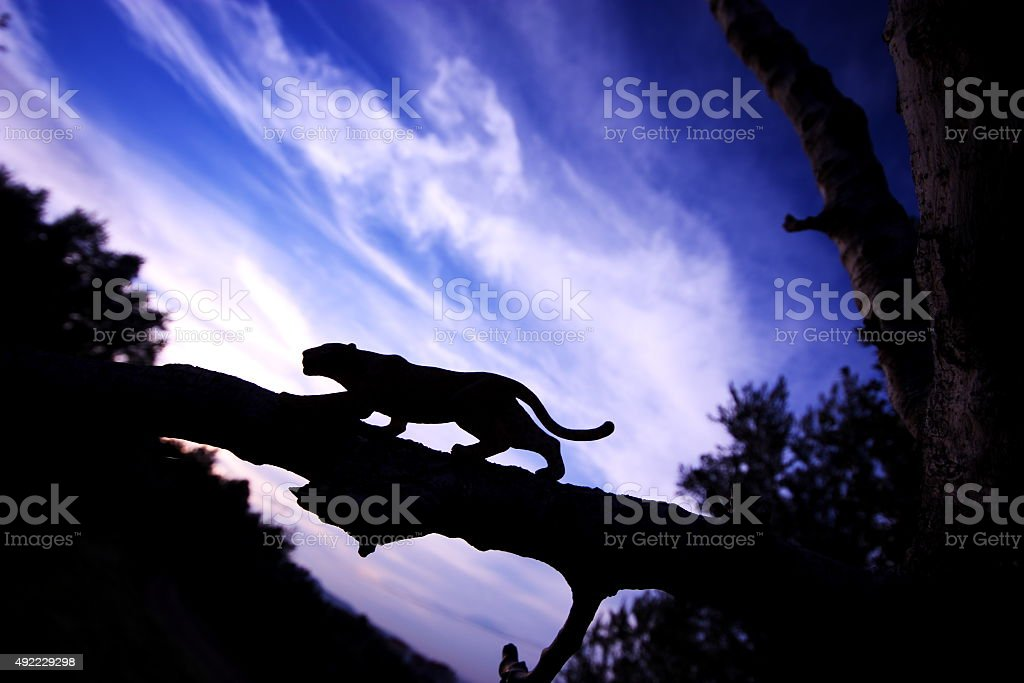 Leopard silhouette stock photo