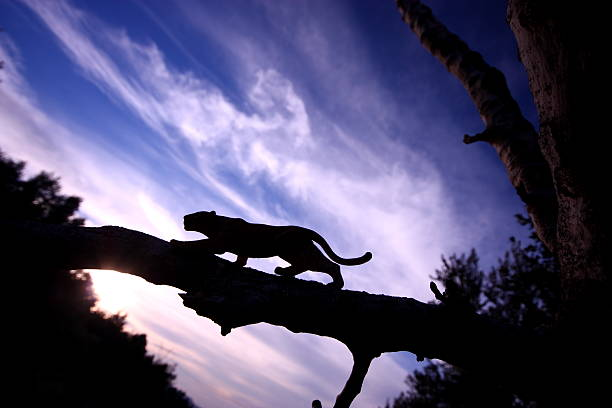 leopard silhouette - black leopard stock pictures, royalty-free photos & images