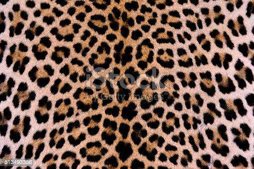 istock Leopard skin - authentic 513493356